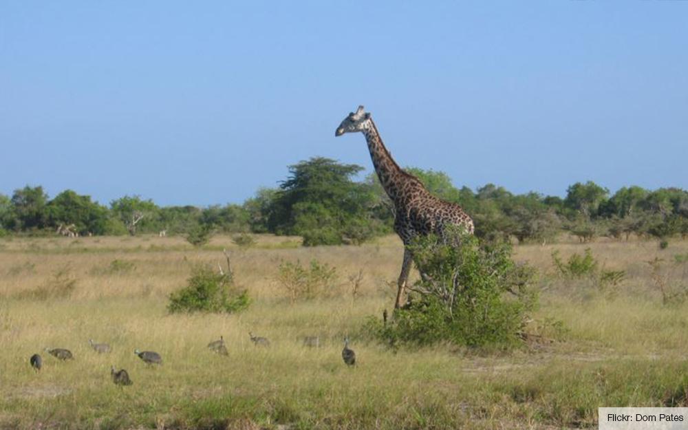 56d110c5105c67 Last but not least  een van de populairste en mooiste natuurparken van  Tanzania. Dat is de Serengeti. De trek van ruim een miljoen gnoes